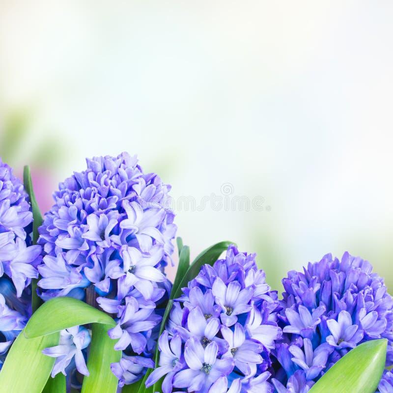 De blauwe bloemen van de Hyacint stock afbeelding