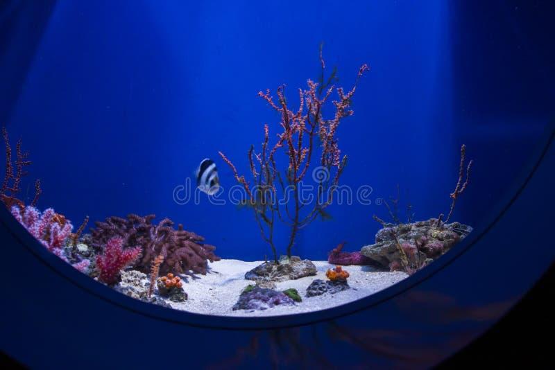 De blauwe bodem van het aquarium met koralen, algen, vissen en landschap stock fotografie