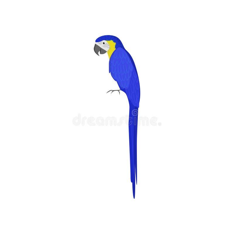 De blauwe die papegaai van Macao op witte achtergrond wordt ge?soleerd vector illustratie