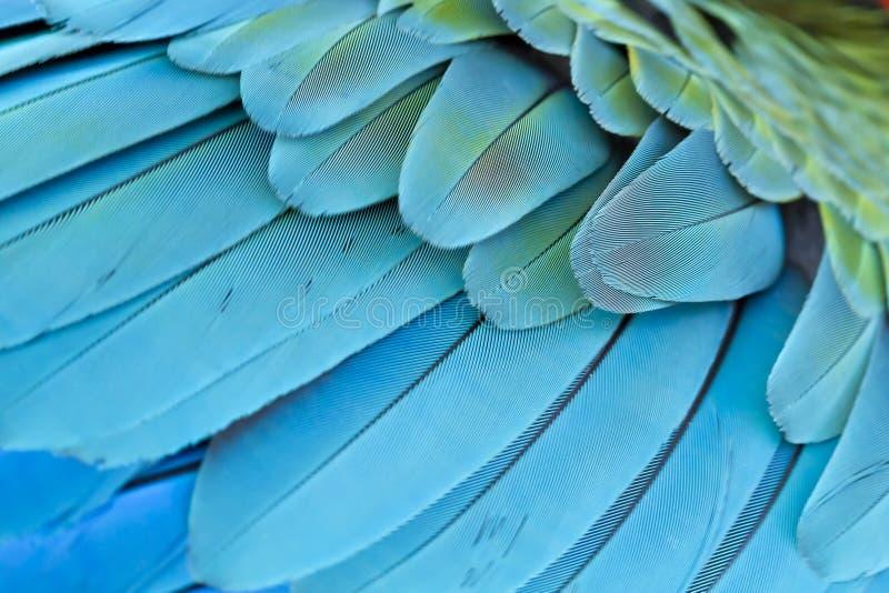 De blauwe en gouden Ara van de close-upveer royalty-vrije stock foto