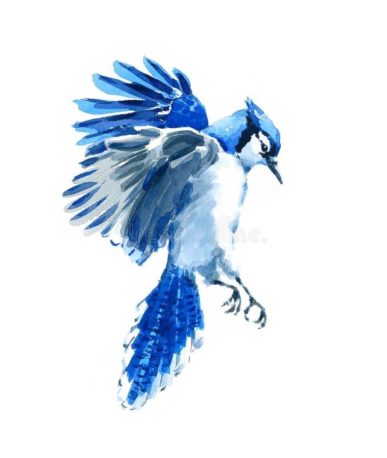 De blauwe Getrokken Hand van de de Vogelillustratie van de Vlaamse gaai vliegende Waterverf royalty-vrije illustratie