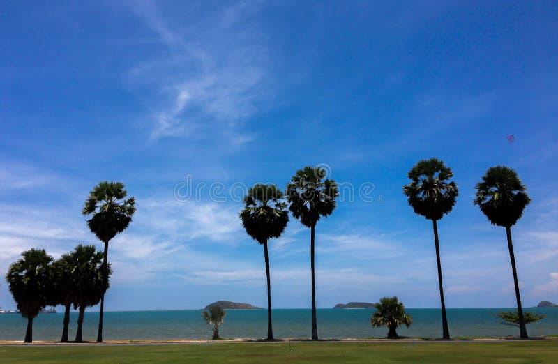 De blauwe hemel van de palmlente royalty-vrije stock afbeeldingen