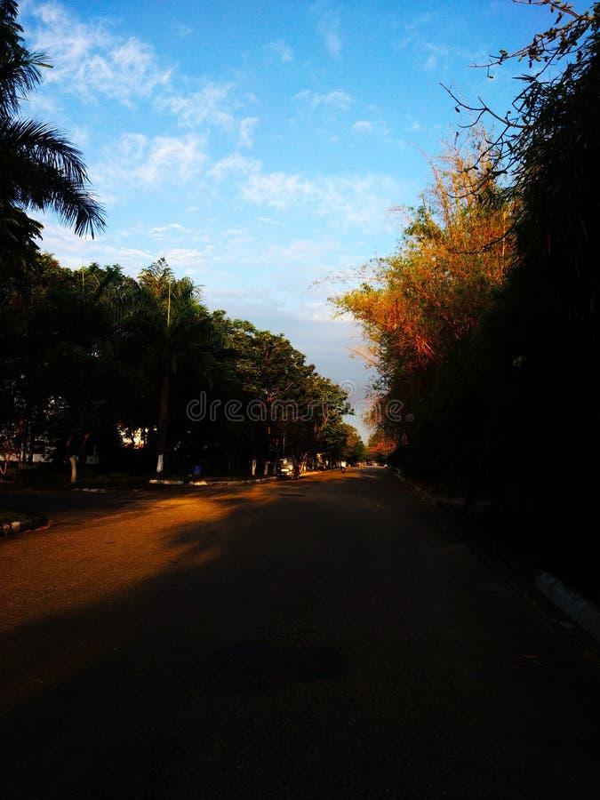 De blauwe hemel van de ochtendmening en rond boom stock foto's
