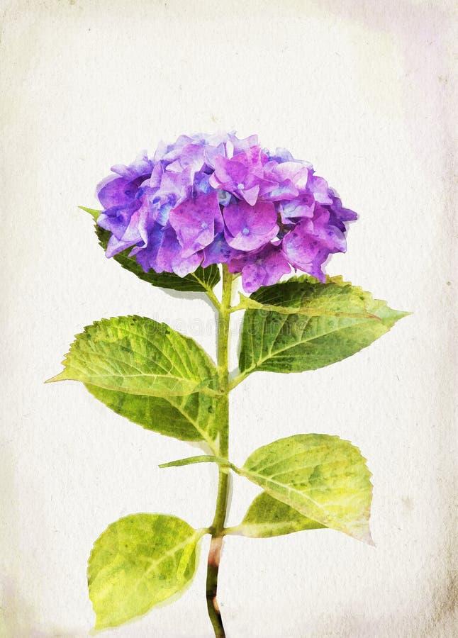 De blauwe hydrangea hortensia van de waterverf vector illustratie