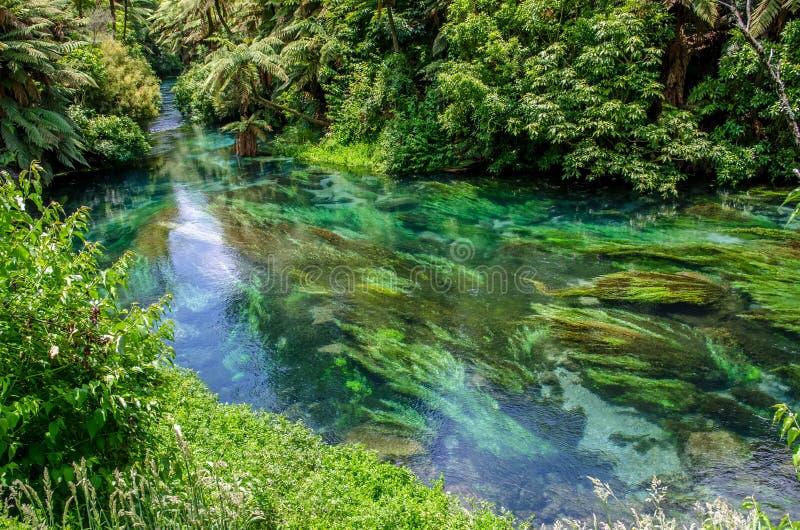 De blauwe Lente die in Te Waihou Walkway, Hamilton New Zealand wordt gevestigd royalty-vrije stock foto's