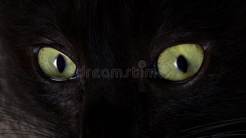 De blik van een zwarte kat De groene Ogen van de Kat stock fotografie