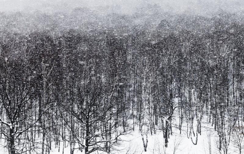 De blizzard ander eiken bos van de sneeuw royalty-vrije stock afbeeldingen
