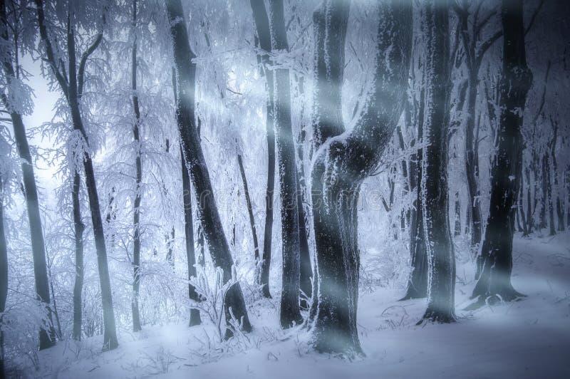 De blizzard van het sneeuwonweer in bevroren bos in de winter stock fotografie