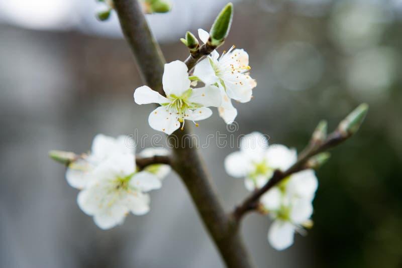 De bloei, de lente is hier royalty-vrije stock foto