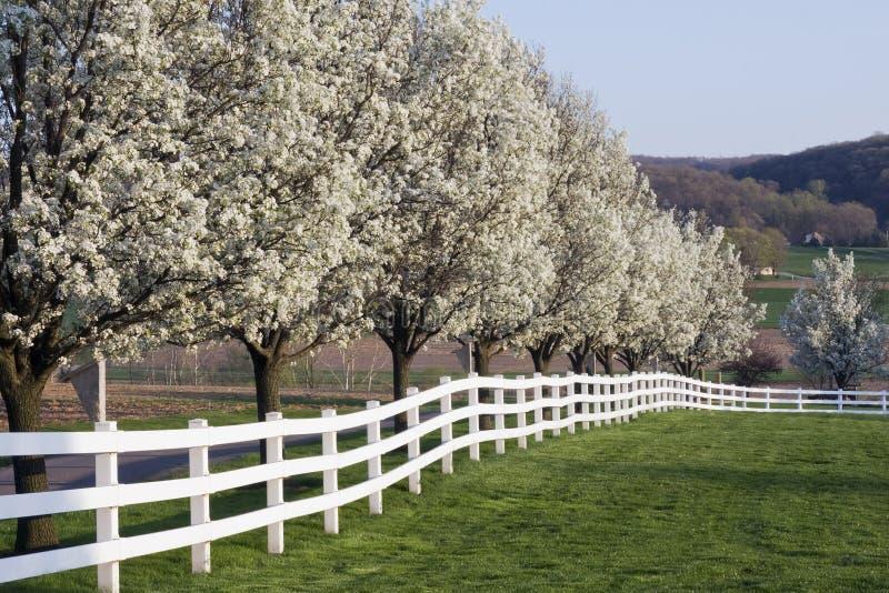 De Bloei van de lentetijd stock fotografie