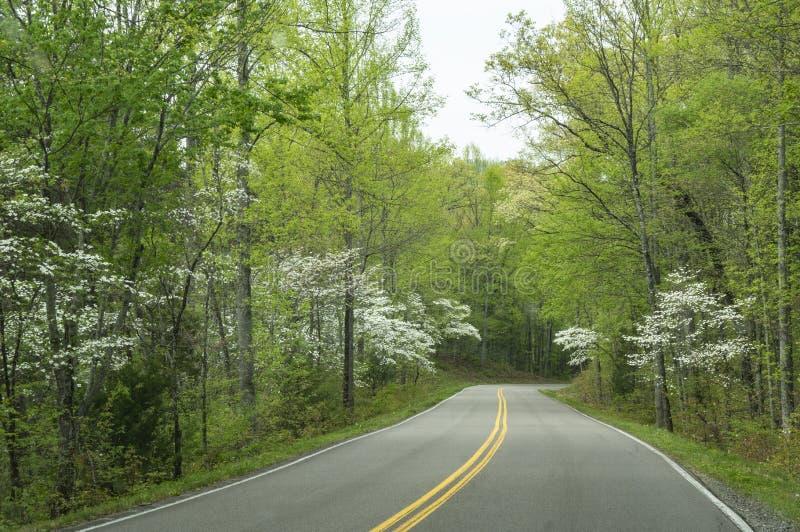 De bloei van kornoeljebomen in een groen bos in Smokies royalty-vrije stock foto's