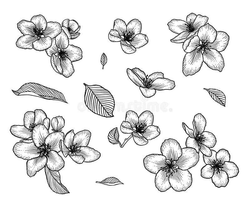 De bloeiende appelboom bloeit hand getrokken illustratiereeks stock illustratie