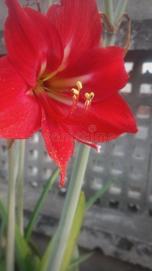 De bloeiende bloem royalty-vrije stock foto's