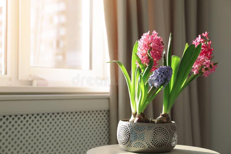 De bloeiende bloemen van de de lentehyacint op lijst dichtbij venster thuis royalty-vrije stock afbeelding