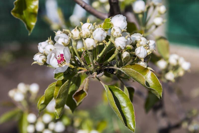De bloeiende bomen van de lente stock afbeeldingen