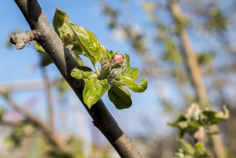 De bloeiende bomen van de lente royalty-vrije stock foto