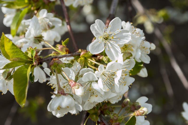 De bloeiende bomen van de lente royalty-vrije stock afbeelding
