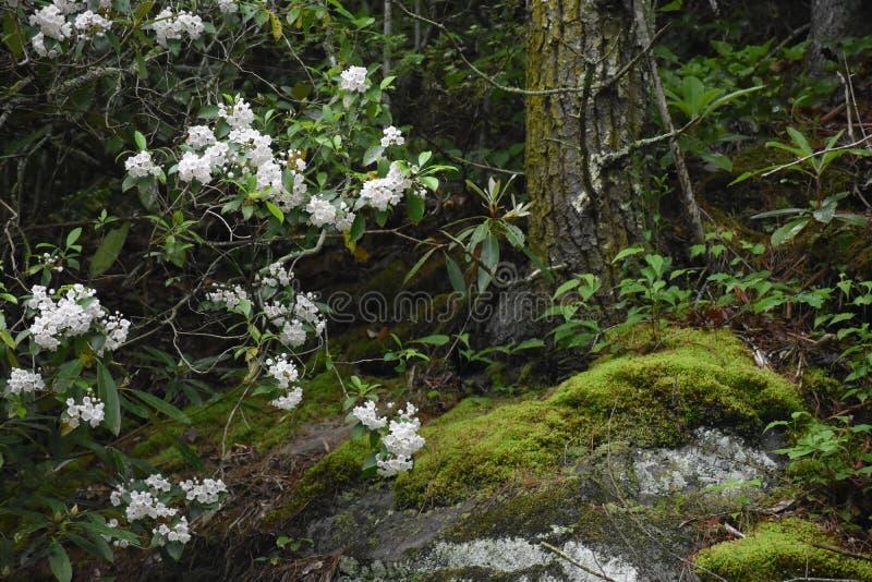 De bloeiende Boom en een mos behandelden boom dichtbij een mos behandelde Grote Rots in het Rokerige Berg Nationale Park royalty-vrije stock afbeelding