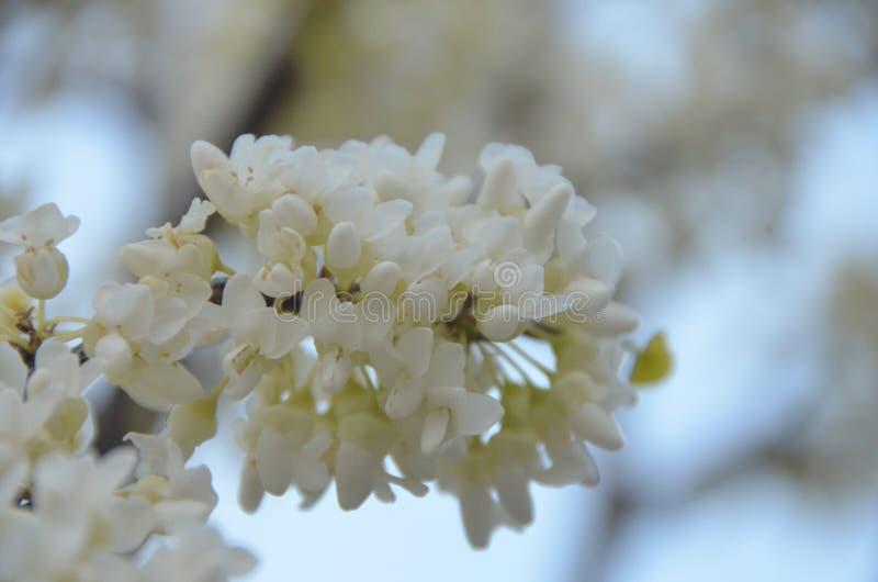De bloeiende lente stock afbeeldingen