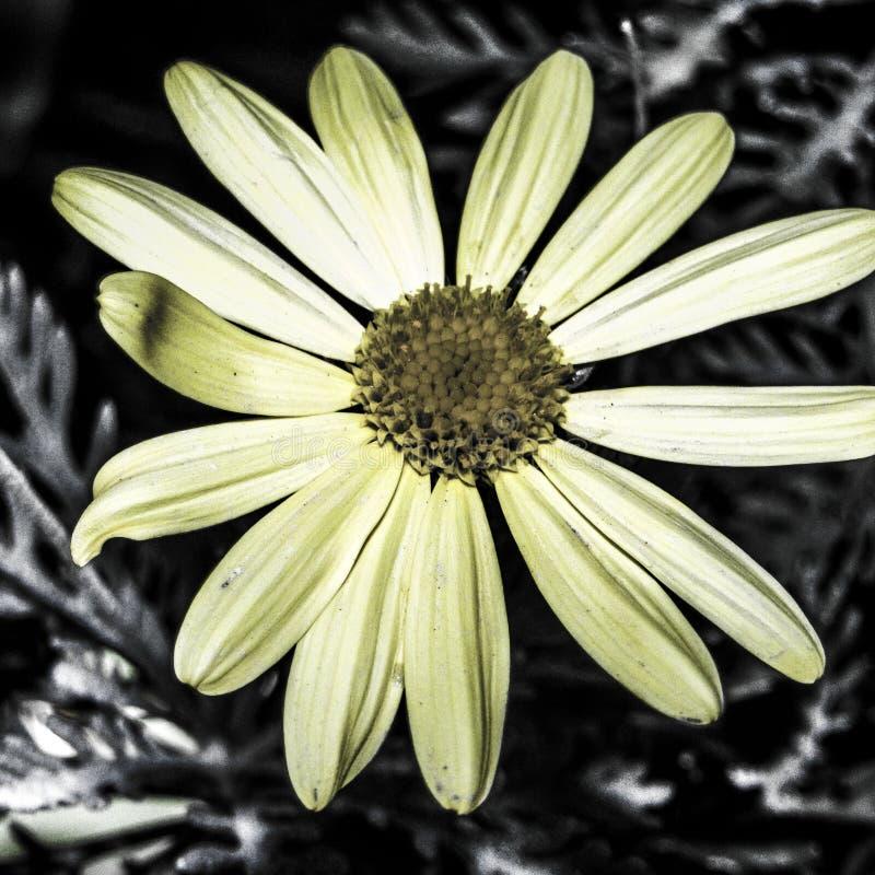 De bloem stock afbeelding