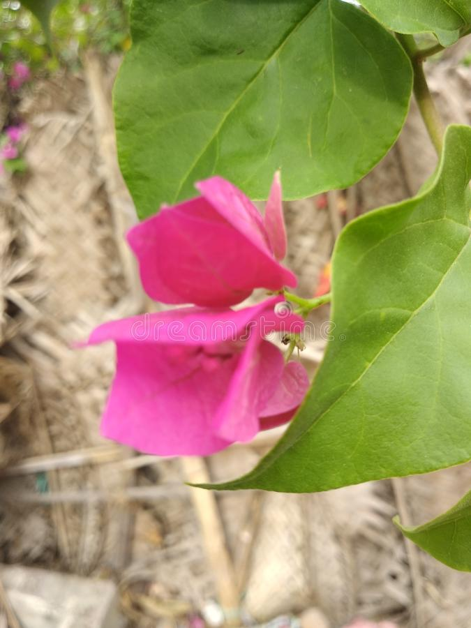De bloem is aardig en en zeer groen groen in aardige img en fotografie stock foto
