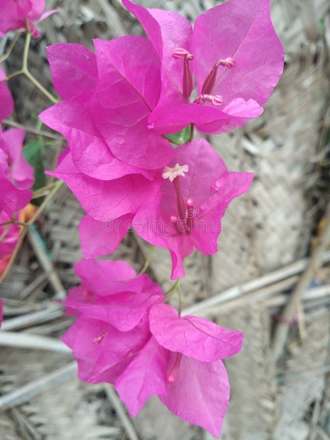 De bloem is aardig en en zeer groen groen in img en fotografie royalty-vrije stock afbeeldingen