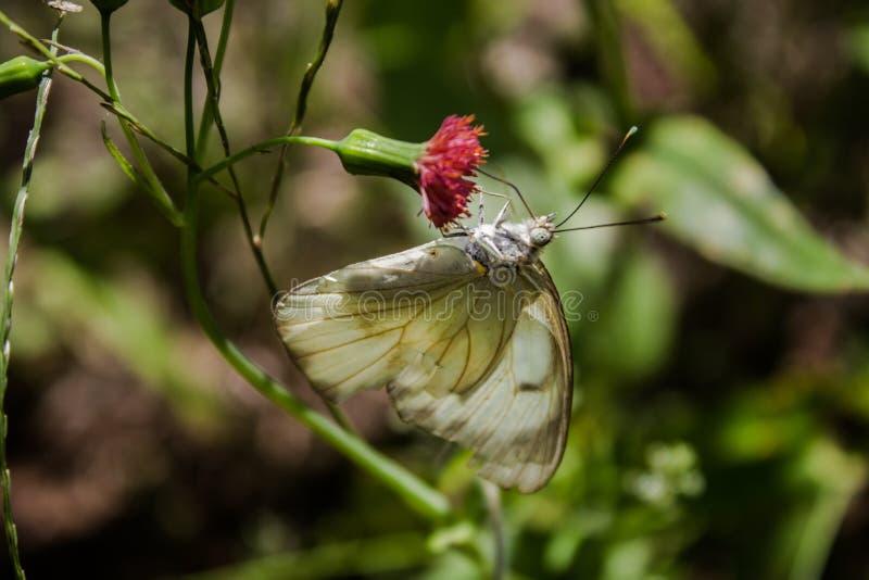 De bloem en de vlinder stock foto