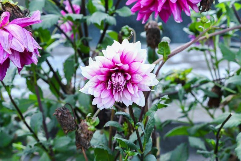 De bloem in groene tuin doorbladert en blauwere achtergrond royalty-vrije stock afbeelding
