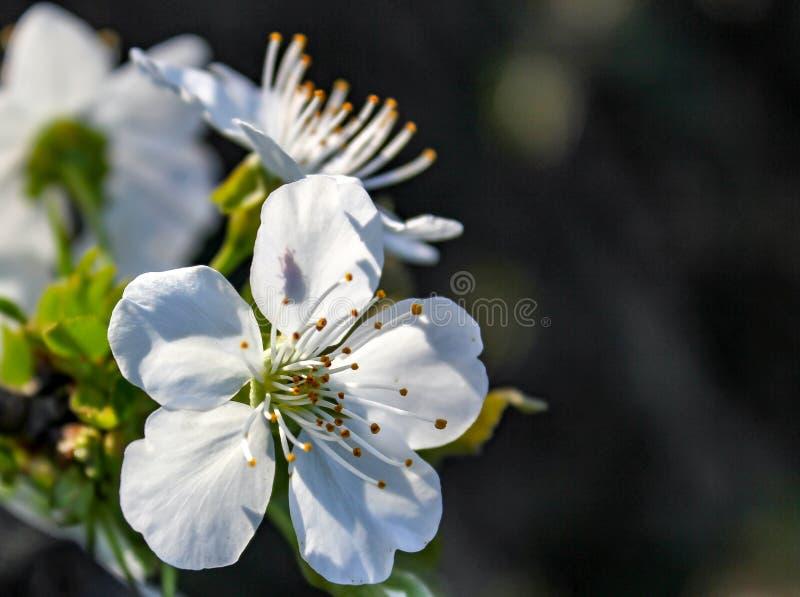 De bloem kondigt de komst van de lente aan royalty-vrije stock fotografie