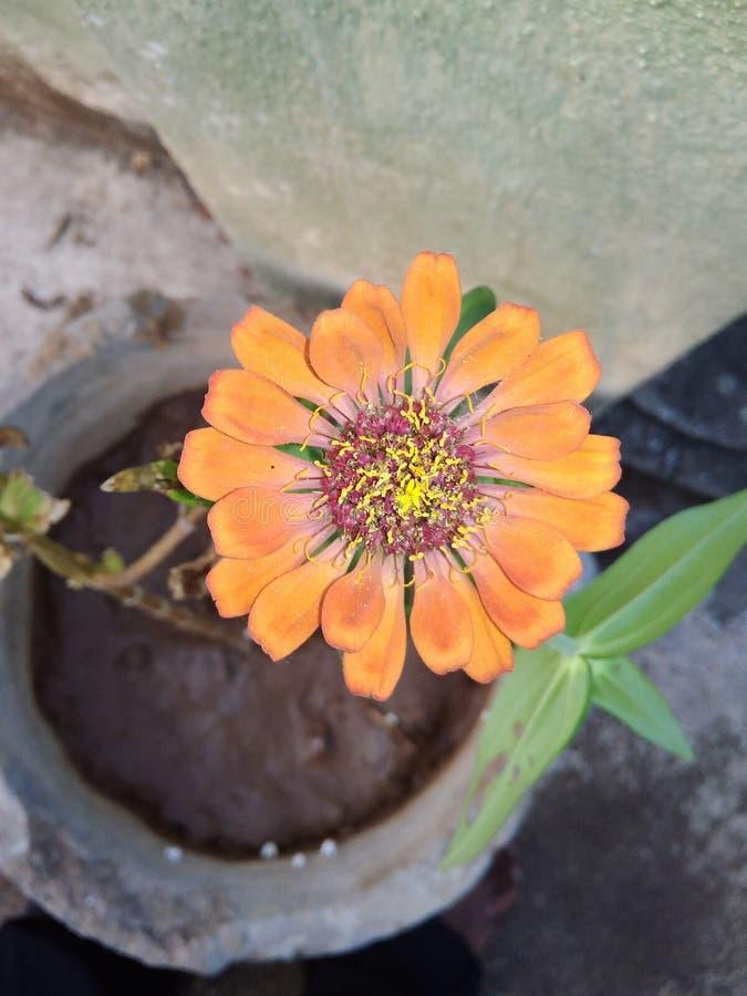 De bloem is liefde royalty-vrije stock foto