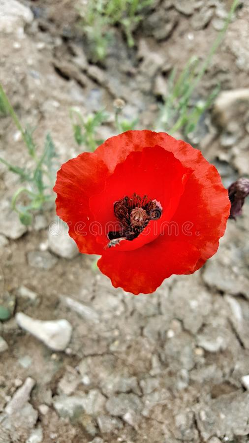 De bloem nam toe royalty-vrije stock fotografie