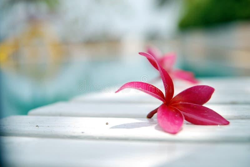 De bloem ontspant royalty-vrije stock afbeeldingen