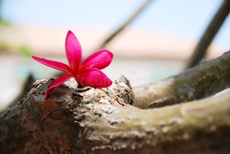 De bloem ontspant royalty-vrije stock fotografie