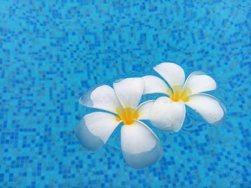 De bloem ontspant royalty-vrije stock foto