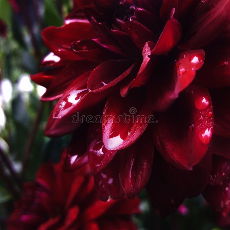 De bloem schreeuwt royalty-vrije stock foto