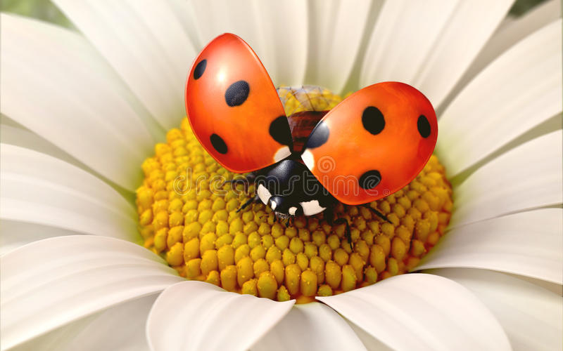 De bloem van Daisy met een onzelieveheersbeestje stock illustratie