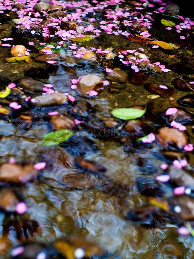 De bloem van dalingen aan het lopen wate stock afbeeldingen