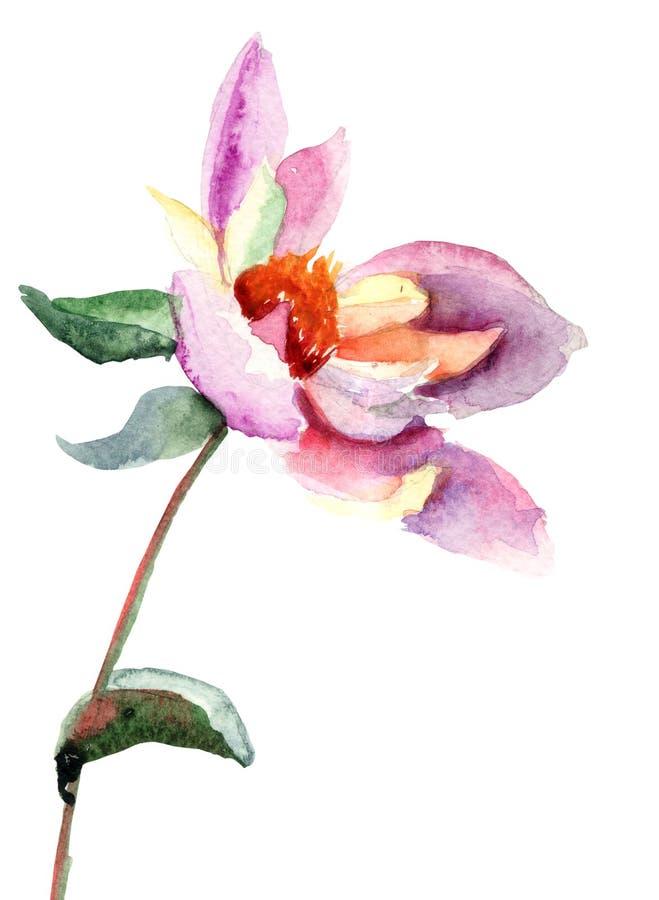 De bloem van de dahlia, waterverfillustratie stock illustratie