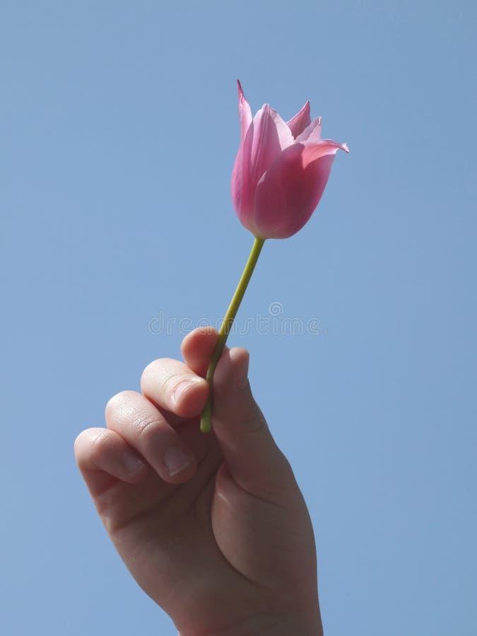 De bloem van de de holdingspink van de Childshand tegen blauwe hemel stock fotografie