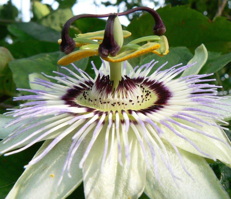 De bloem van de hartstocht royalty-vrije stock foto's