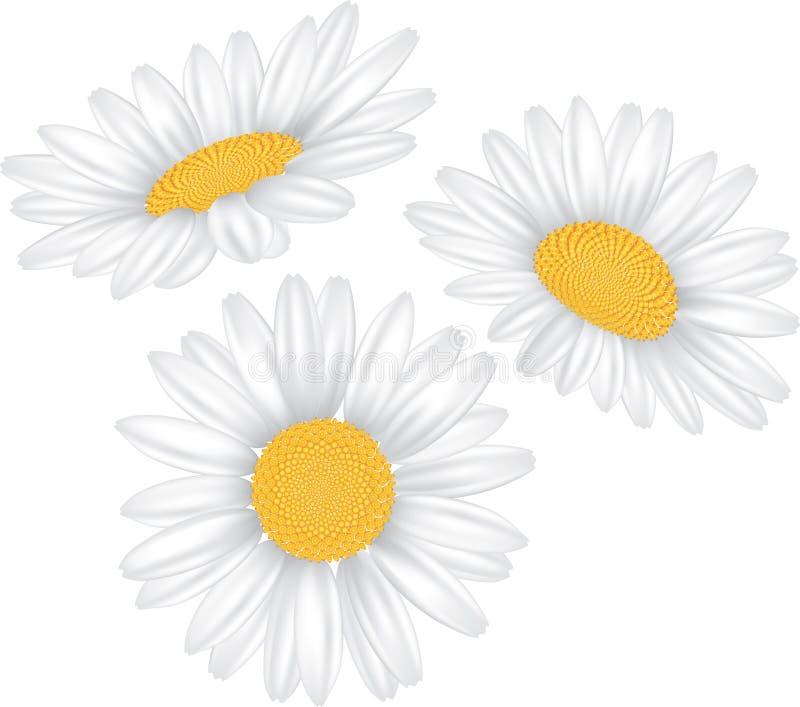 De bloem van de kamille die op wit wordt geïsoleerde vector illustratie