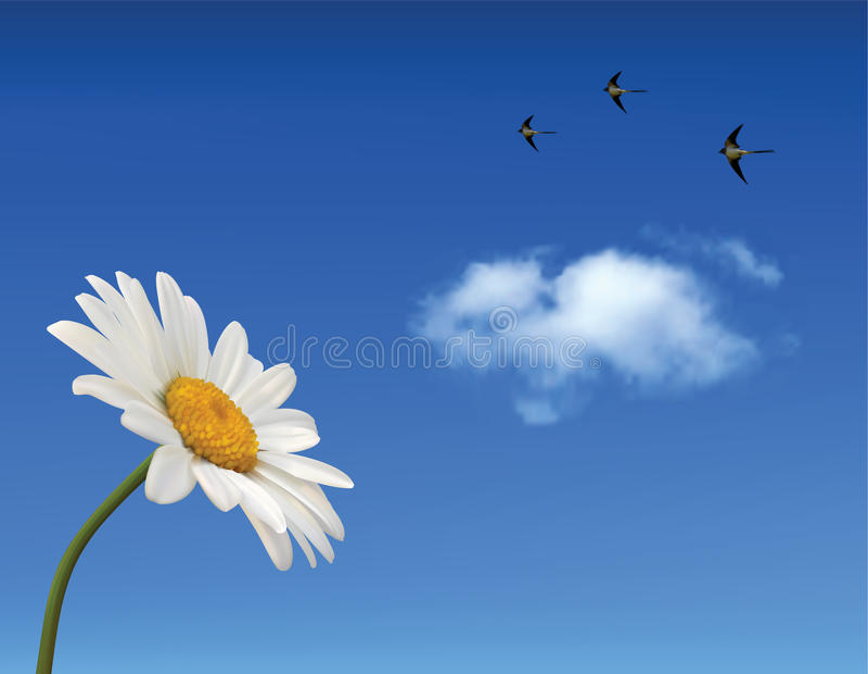 De bloem van de kamille en blauwe hemel vector illustratie