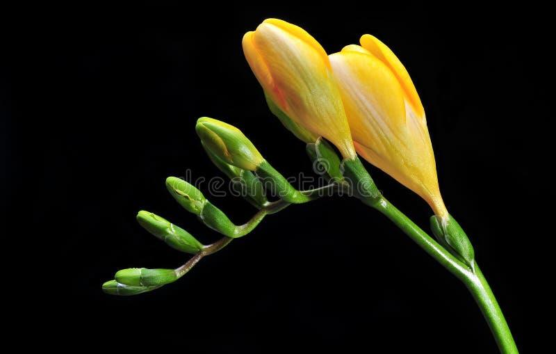 De bloem van de lente stock foto