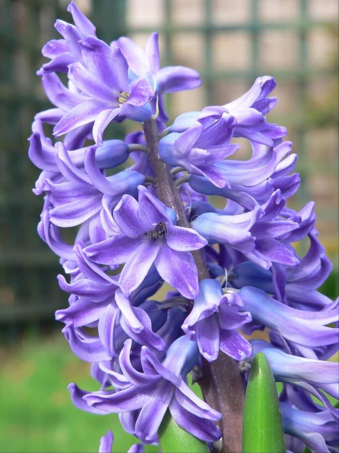 De bloem van de lente. stock fotografie