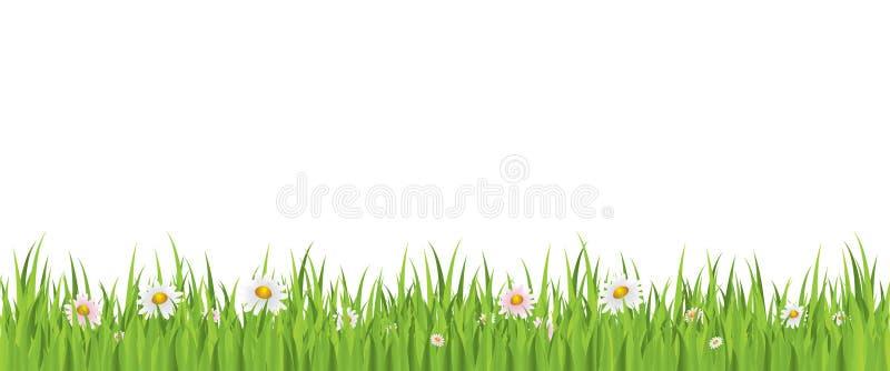 De bloem van de lente en gras naadloze achtergrond royalty-vrije illustratie