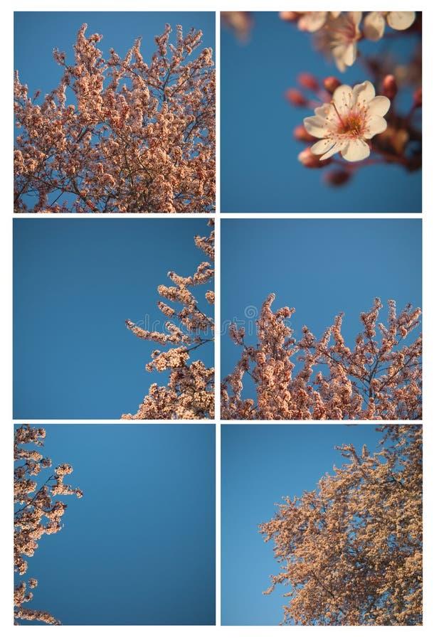 De bloem van de lente op een boomcollage stock foto