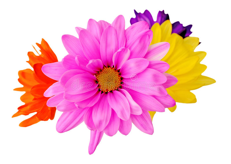 Download De bloem van de mengeling stock afbeelding. Afbeelding bestaande uit roze - 29511149