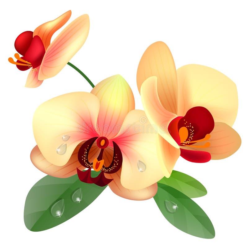 De bloem van de orchidee vector illustratie