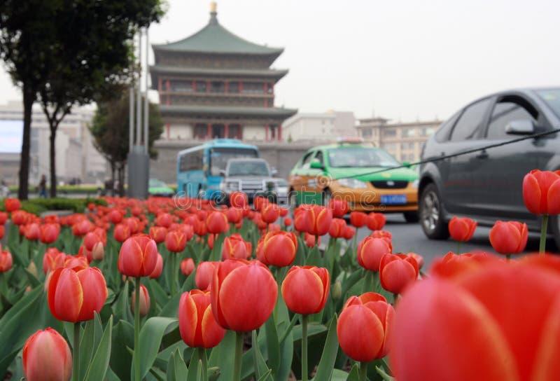 De bloem van de tulp royalty-vrije stock afbeelding