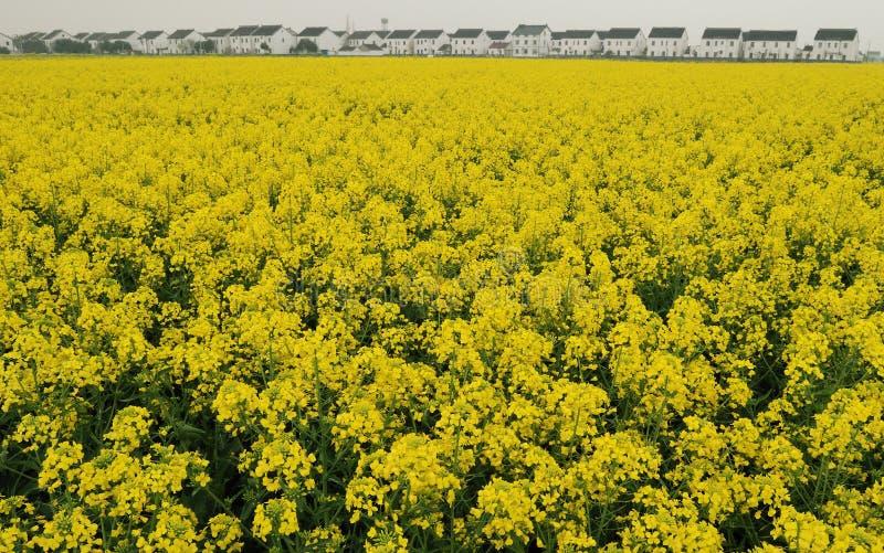 De bloem van de verkrachting in de lentesuzhou China stock afbeeldingen